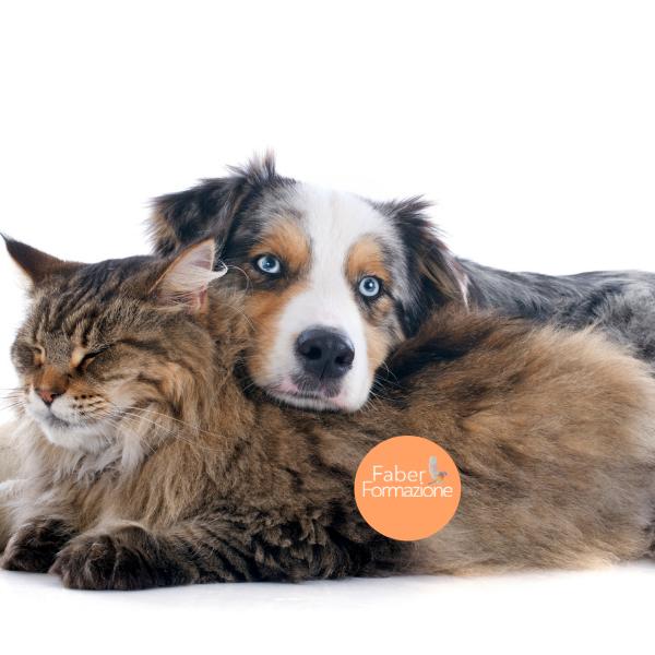 Casi Clinici di Nutrizione e Dietetica del Cane e del Gatto
