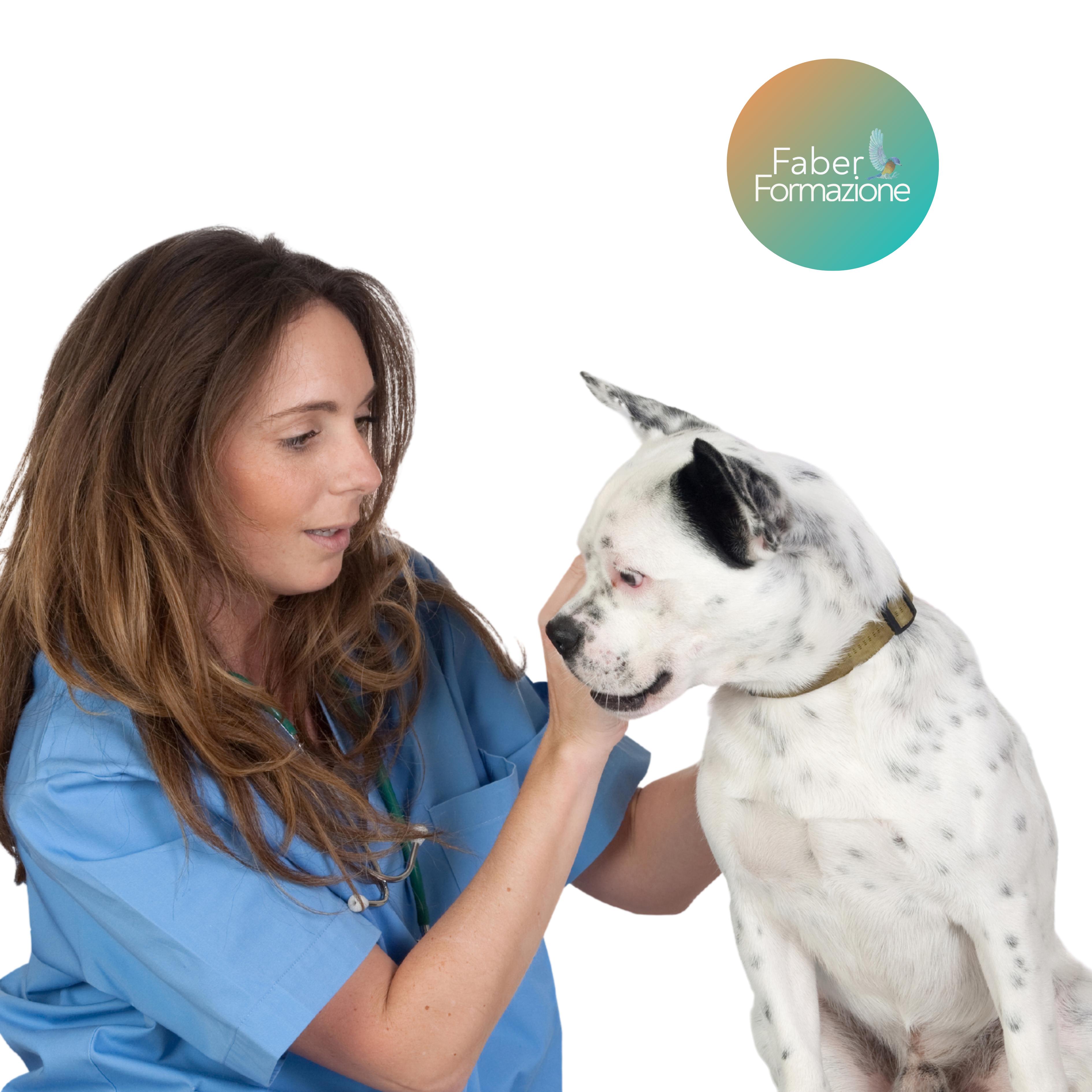 Caso Clinico di Nutrizione e Dietetica del Cane e del Gatto  - 19 11 2020