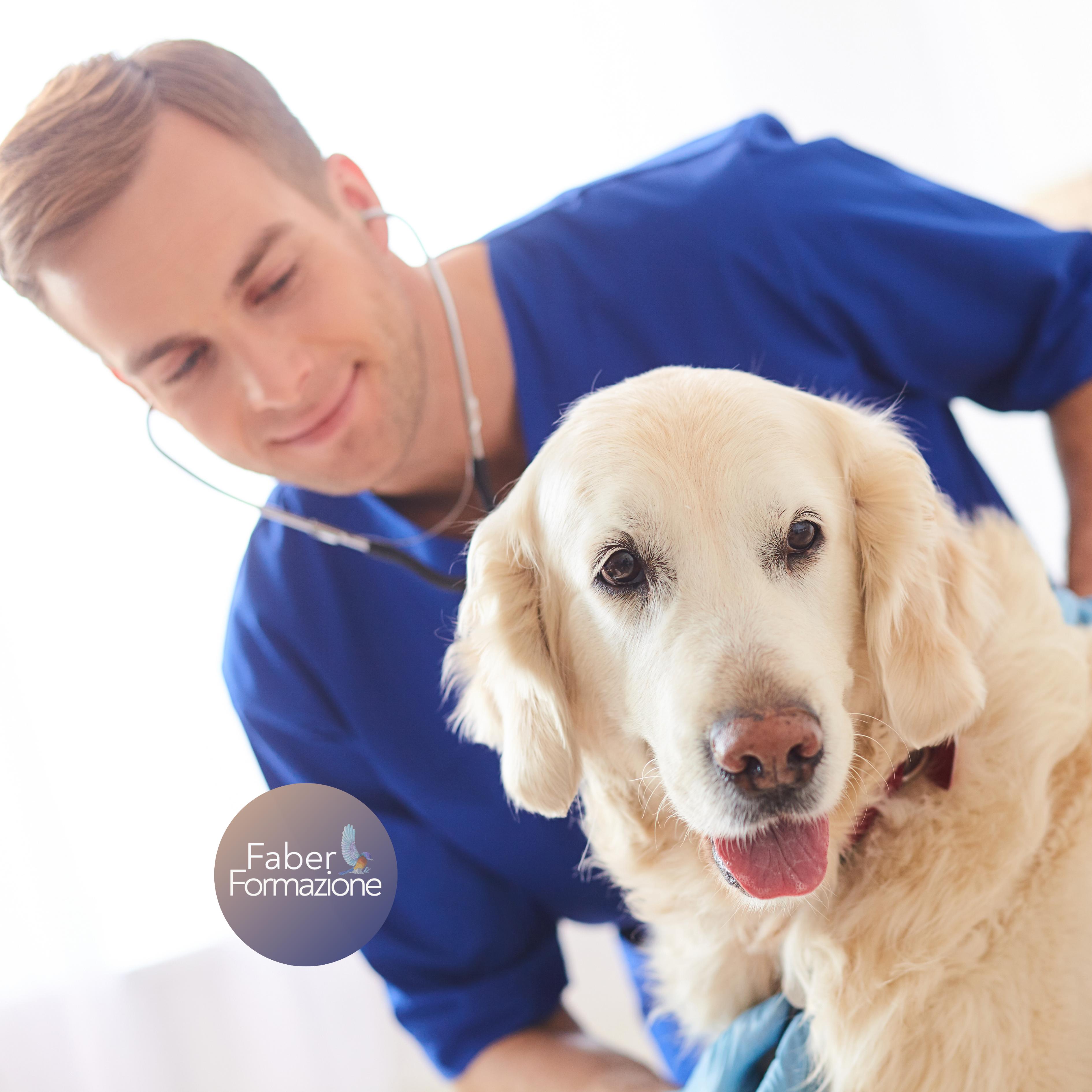 Caso Clinico di Nutrizione e Dietetica del Cane e del Gatto - 28 01 21