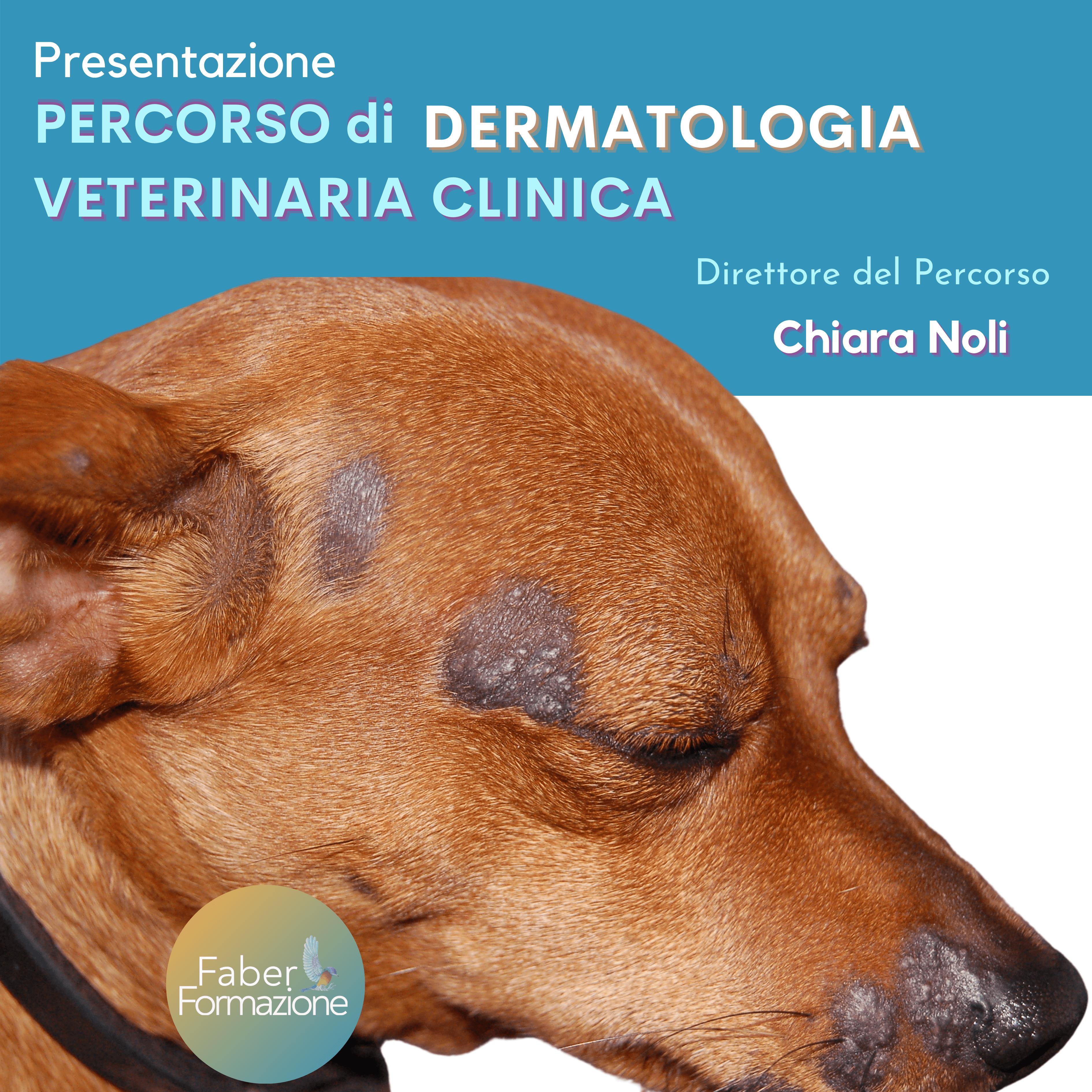 Presentazione Percorso Di Dermatologia Veterinaria Clinica